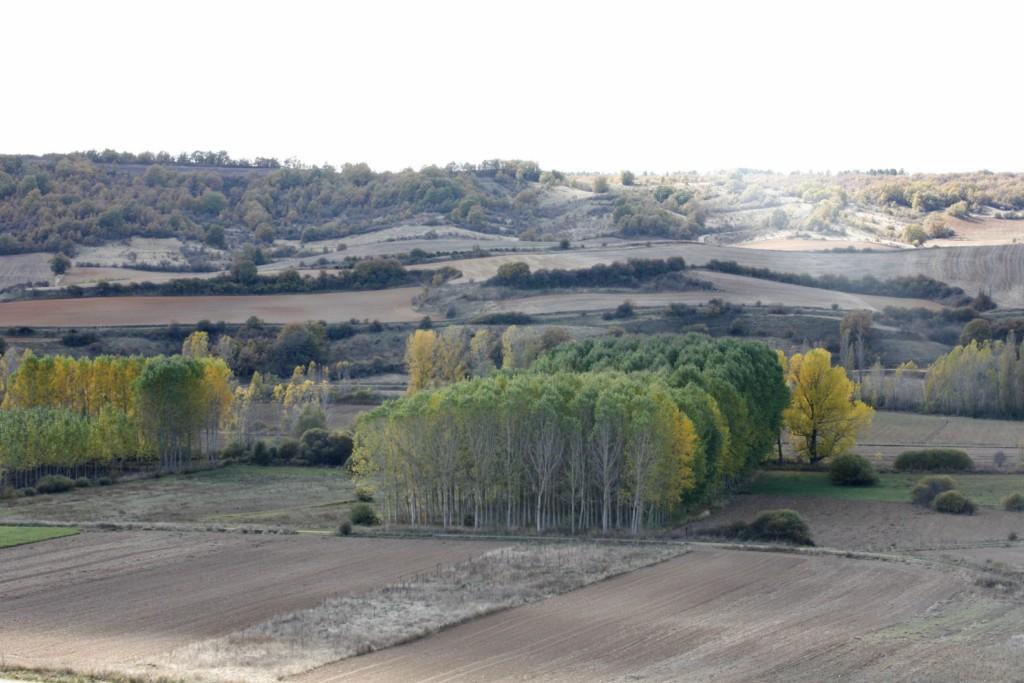 Paisaje Congosto de Valdavia